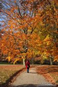Travel photography:Park in autumn , Germany