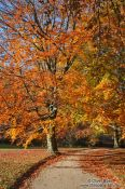 Travel photography:Trees in autumn colour, Germany