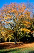 Travel photography:Tree in autumn colour