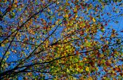 Travel photography:Tree branches in autumn colour against the sky