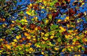 Travel photography:Tree branches with leaves against the sky