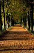 Travel photography:Park lane in autumn colours
