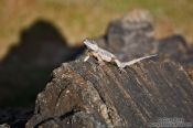 Travel photography:Lizard on a beach in Salvador de Bahia, Brazil
