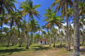 Travel photography:Boipeba Island beach cottage, Brazil