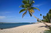 Travel photography:Palm tree on Boipeba Island beach, Brazil