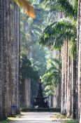 Travel photography:Avenue of Royal palms (Roystonea) within Rio´s Botanical Garden, Brazil
