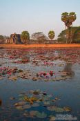 Travel photography:Pool with water lilies within Angkor Wat , Cambodia