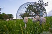 Travel photography:Montreal biosphere with mushrooms , Canada