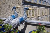 Travel photography:Two birds near the museum of civilisation in Quebec, Canada