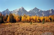 Travel photography:Trees in autumn colour at Lake Louise, Canada