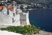Travel photography:Plant on the city wall in Dubrovnik, Croatia