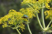 Travel photography:Small beetle on Mljet island, Croatia