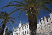 Travel photography:Houses with palm tree in Trogir, Croatia