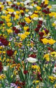 Travel photography:Flower bed outside Zagreb theatre, Croatia