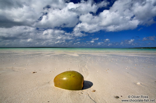 Washed-up coconut at Cayo-las-Bruchas beach