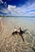 Travel photography:Washed-up tree stump at Cayo-las-Bruchas beach, Cuba