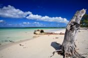 Travel photography:Tree trunk at Cayo-las-Bruchas beach, Cuba