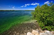 Travel photography:Mangroves growing along a tidal channel at Cayo-las-Bruchas, Cuba