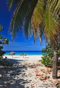 Travel photography:Palms in Varadero , Cuba