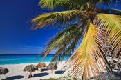 Travel photography:Palm tree on Varadero beach, Cuba