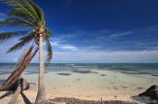 Travel photography:Wind-bent palm tree on a beach in Cayo-Jutías, Cuba
