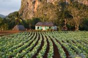 Travel photography:Small hut in tobacco field near Viñales, Cuba
