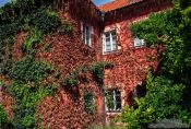 Travel photography:Ivy covered house, Czech Republic