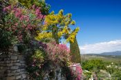 Travel photography:Plants of Provence in Gordes, France