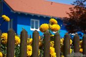 Travel photography:Flowers with blue house in the Allgäu, Germany