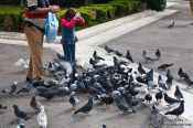 Travel photography:Feeding pidgeons in Athens, Greece