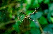 Travel photography:Spider, Hawaii USA