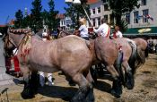 Travel photography:Competition horses at a festival in Vlissingen, Holland (The Netherlands)
