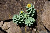 Travel photography:Small plant at Streitishvarf, Iceland