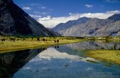 Travel photography:Donkeys at a mountain lake near Diskit, India