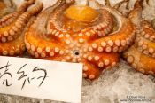 Travel photography:Octopus for sale at the Tokyo Tsukiji fish market, Japan