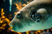 Travel photography:Fish at the Osaka Kaiyukan Aquarium, Japan