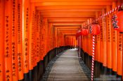 Shrines and Temples of Kyoto