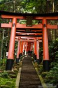 Travel photography:Row of torii at Kyoto`s Inari shrine, Japan