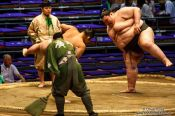 Travel photography:Makushita ranked wrestlers perform the leg-stomping (shiko) exercise to drive evil spirits from the ring (dohyoin) at the Nagoya Sumo Tournament, Japan