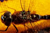 Travel photography:Dragonfly close-up