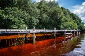 Travel photography:Mangrove forest near Celestun, Mexico