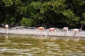 Travel photography:Celestun flamingos, Mexico