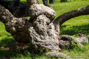 Travel photography:Tree in Oaxaca, Mexico