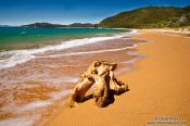 Travel photography:Tree stump on a beach in Abel Tasman National Park, New Zealand