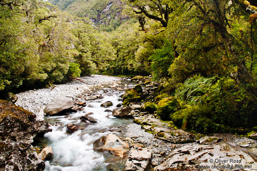 River in Fiordland National Park