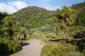 Travel photography:Path near Karekare beach, New Zealand