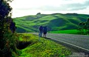 Travel photography:Hitchhikers, New Zealand
