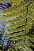 Travel photography:Fern near Whanganui, New Zealand