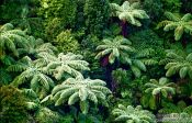 Travel photography:Bush near Silverdale, New Zealand
