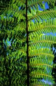 Travel photography:Fern branch against the sky, New Zealand